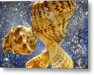 Metal Print featuring the photograph Seashells by Paula Brown