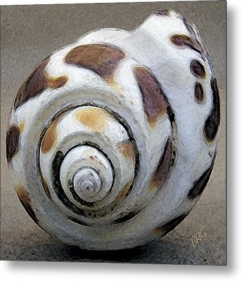 Seashells Spectacular No 2 Metal Print