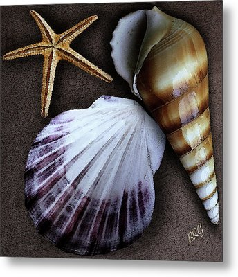 Seashells Spectacular No 37 Metal Print by Ben and Raisa Gertsberg