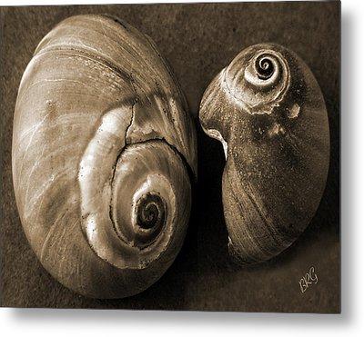 Seashells Spectacular No 6 Metal Print by Ben and Raisa Gertsberg