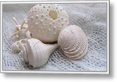Seashells Study 1 Metal Print by Danielle  Parent