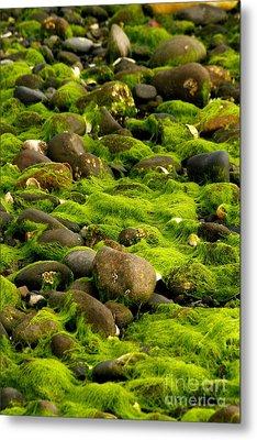 Seaweed And Rocks 2 Metal Print