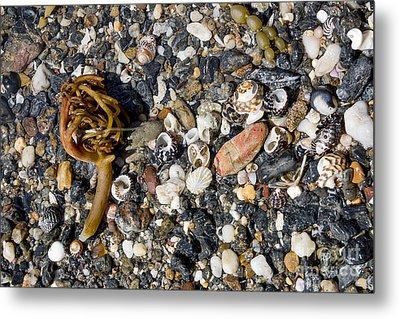 Seaweed And Shells Metal Print by Steven Ralser