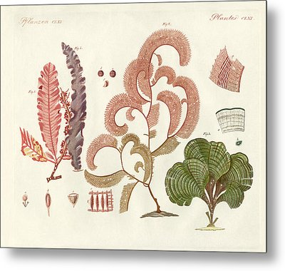 Seaweed Different Kinds Metal Print by Splendid Art Prints