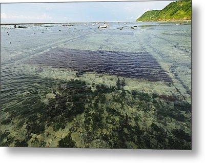 Seaweed Farming, Bali Metal Print by Science Photo Library