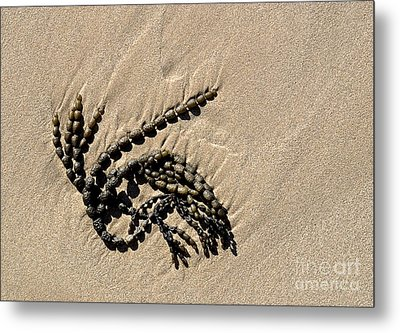 Seaweed On Beach Metal Print by Steven Ralser
