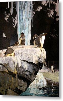 Seaworld Penguins Metal Print by David Nicholls