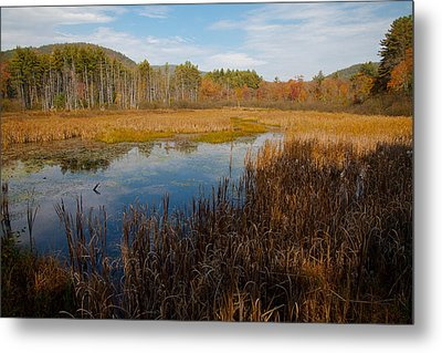 Secluded Adirondack Pond Metal Print by David Patterson