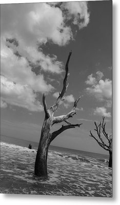 Second Glance Metal Print by Steven  Taylor