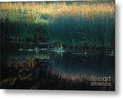 Metal Print featuring the photograph Sedges At Sunset by Cynthia Lagoudakis