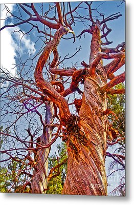 Sedona Arizona Ghost Tree Metal Print by Gregory Dyer