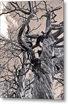 Sedona Arizona Ghost Tree In Black And White Metal Print by Gregory Dyer