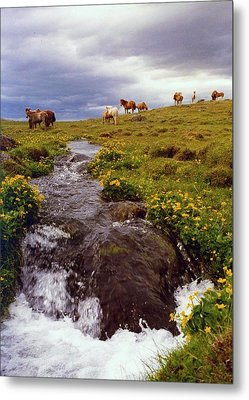 Metal Print featuring the photograph See The Pretty Horses by Debra Kaye McKrill