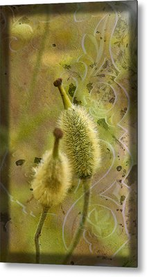 Metal Print featuring the photograph Seed Pods - Meconopsis Paniculata by Liz  Alderdice
