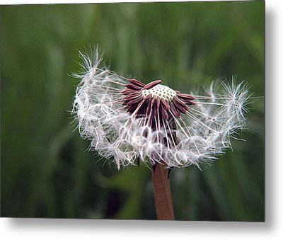 Seeds And Stems Metal Print by Suzy Piatt