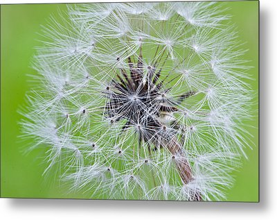 Seeds Of Life Metal Print