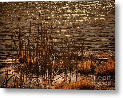 Seegrass Riple Metal Print by Angelika Drake