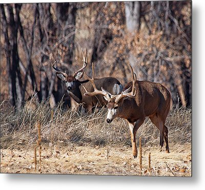 Metal Print featuring the photograph Seeing Double by Jim Garrison