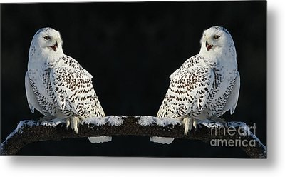 Seeing Double- Snowy Owl At Twilight Metal Print by Inspired Nature Photography Fine Art Photography