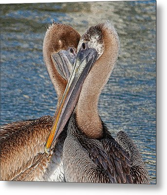 Eye 2 Eye - Heart 2 Heart - Brown Pelican Metal Print by HH Photography of Florida