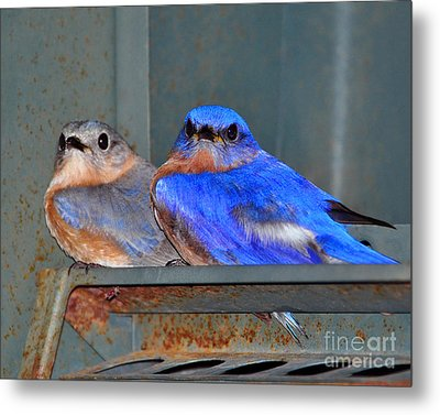 Seeking Shelter Metal Print by Al Powell Photography USA