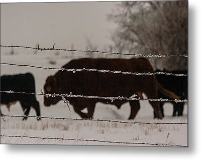 Seeking Shelter From The Cold Metal Print by Shirley Heier