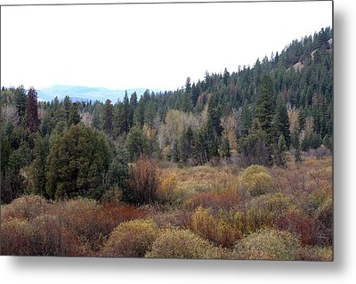 Seeley Lake Metal Print by Larry Stolle