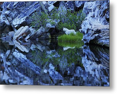 Metal Print featuring the photograph Sekani Wild by Sean Sarsfield
