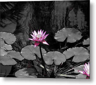 Metal Print featuring the photograph Selective Lily by Oscar Alvarez Jr