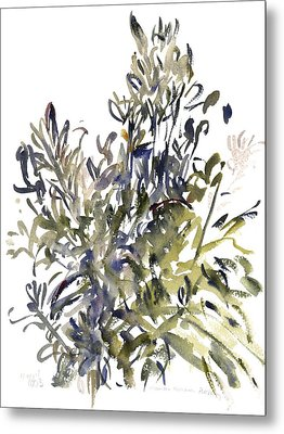 Senecio And Other Plants Metal Print by Claudia Hutchins-Puechavy