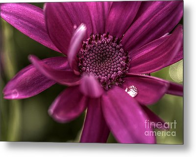 Senetti Water Droplet Metal Print by Andrew Pounder