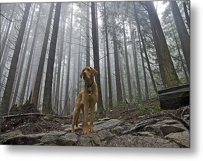 Metal Print featuring the photograph Sentinel by Kathy King