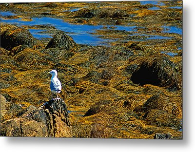 Metal Print featuring the photograph Sentinel Seagull by Nancy De Flon