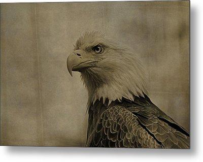 Sepia Bald Eagle Portrait Metal Print