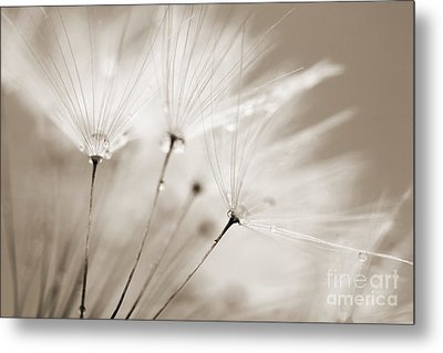 Sepia Dandelion Clock And Water Droplets Metal Print by Natalie Kinnear