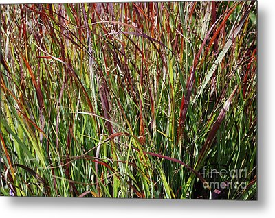 September Grasses By Jrr Metal Print by First Star Art