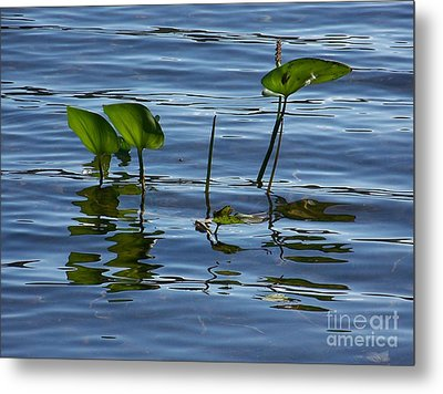 September Reflections Metal Print
