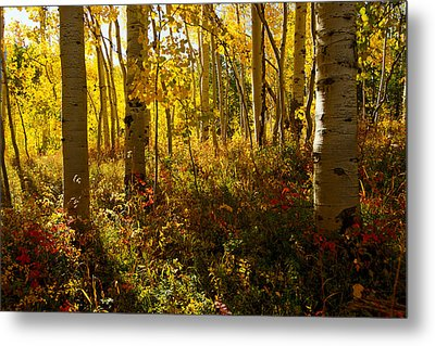 September Scene Metal Print by Jeremy Rhoades
