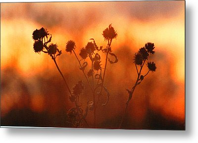 September Sonlight Metal Print