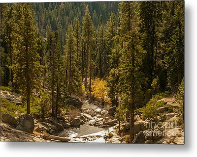 Sequoia National Park  1-7832 Metal Print