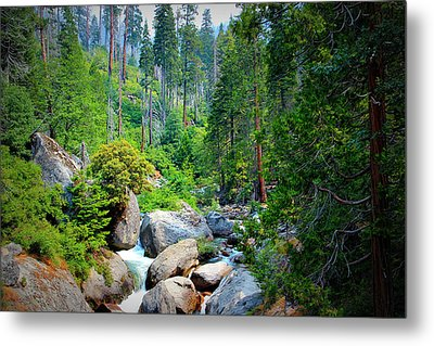 Sequoia Stream Metal Print