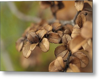 Serendipity .. Unity Metal Print by Connie Handscomb