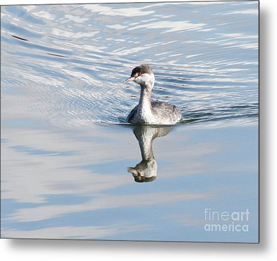 Metal Print featuring the photograph Serene Grebe by Anita Oakley