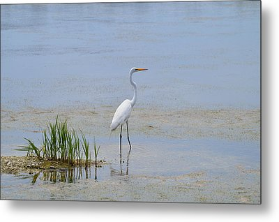 Metal Print featuring the photograph Serene by Judith Morris