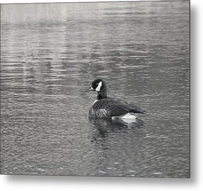 Serene Waters Metal Print by Mary Zeman