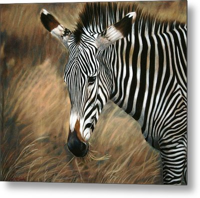Serengeti Zebra Metal Print by Carol McCarty
