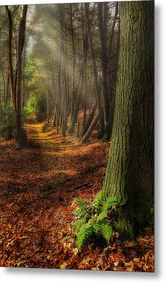 Serenity Of The Forest Metal Print by Bill Wakeley