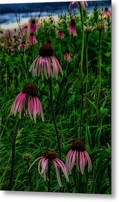 Metal Print featuring the photograph Serious Coneflowers by Kimberleigh Ladd