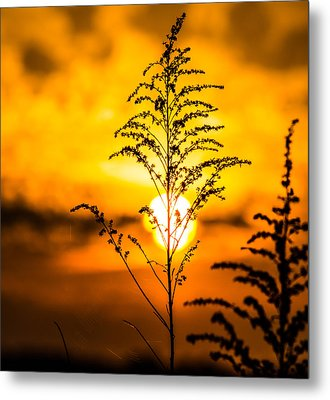 Setting Sun Metal Print by Parker Cunningham