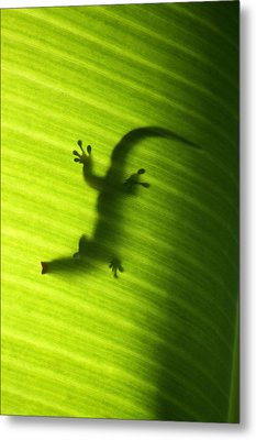 Seychelles Small Day Gecko Metal Print by Fabrizio Troiani